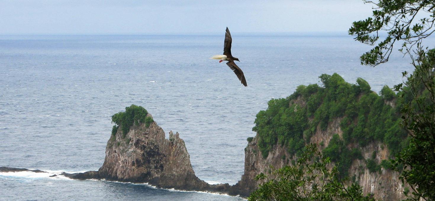 National Park of American Samoa Wildlife