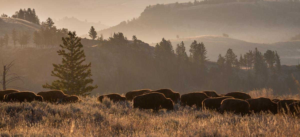 National Park Wildlife