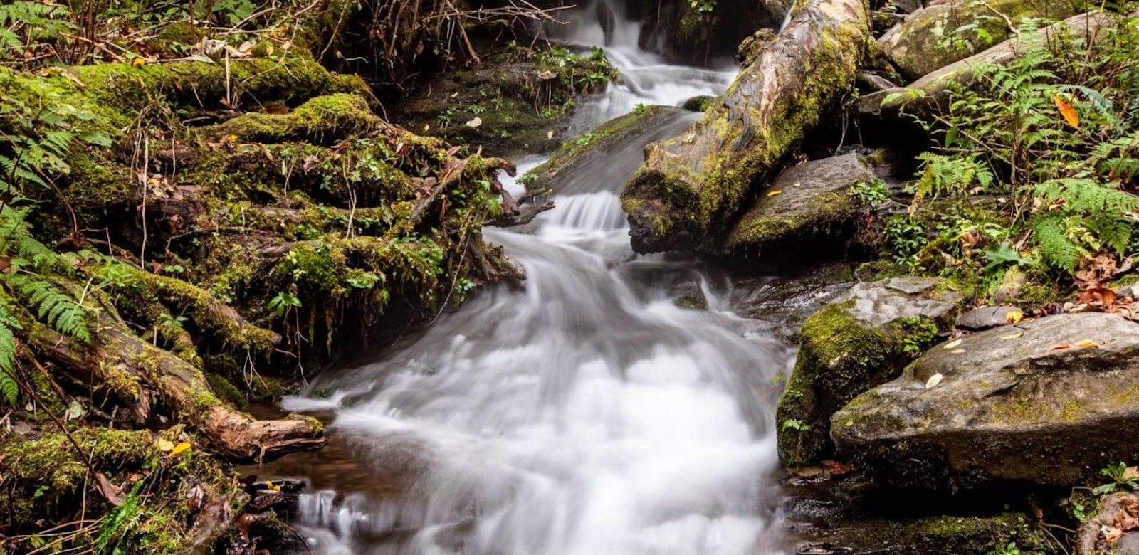 Roaring Fork Motor Nature Trail, Great Smoky Mountains National Park, North Carolina/Tennessee | Photo Credit: Vezzani Photography