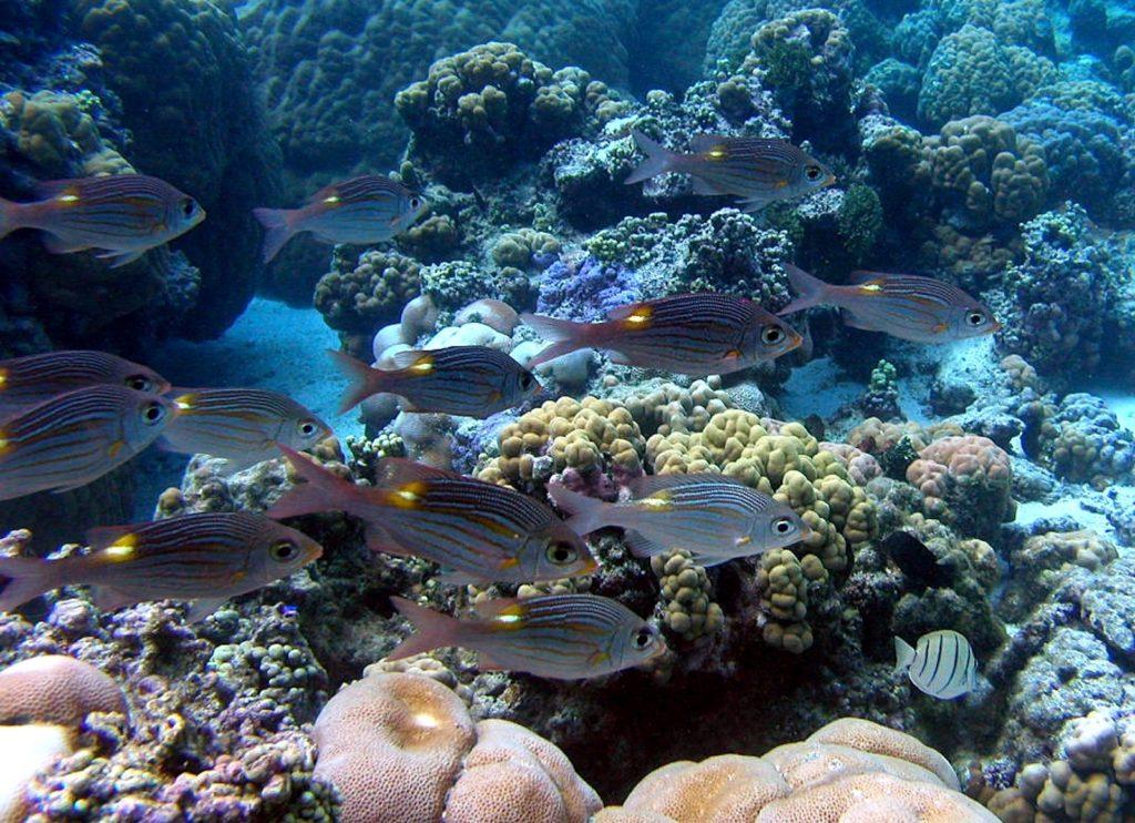 Snorkeling, Ofu Island, National Park of American Samoa
