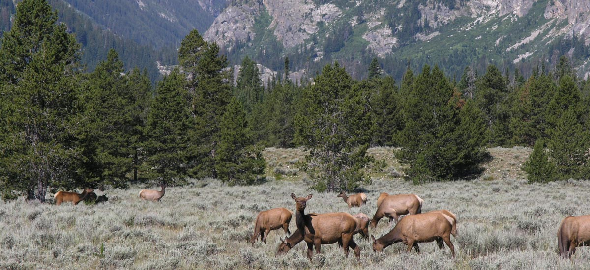 Grand Teton National Park Wildlife