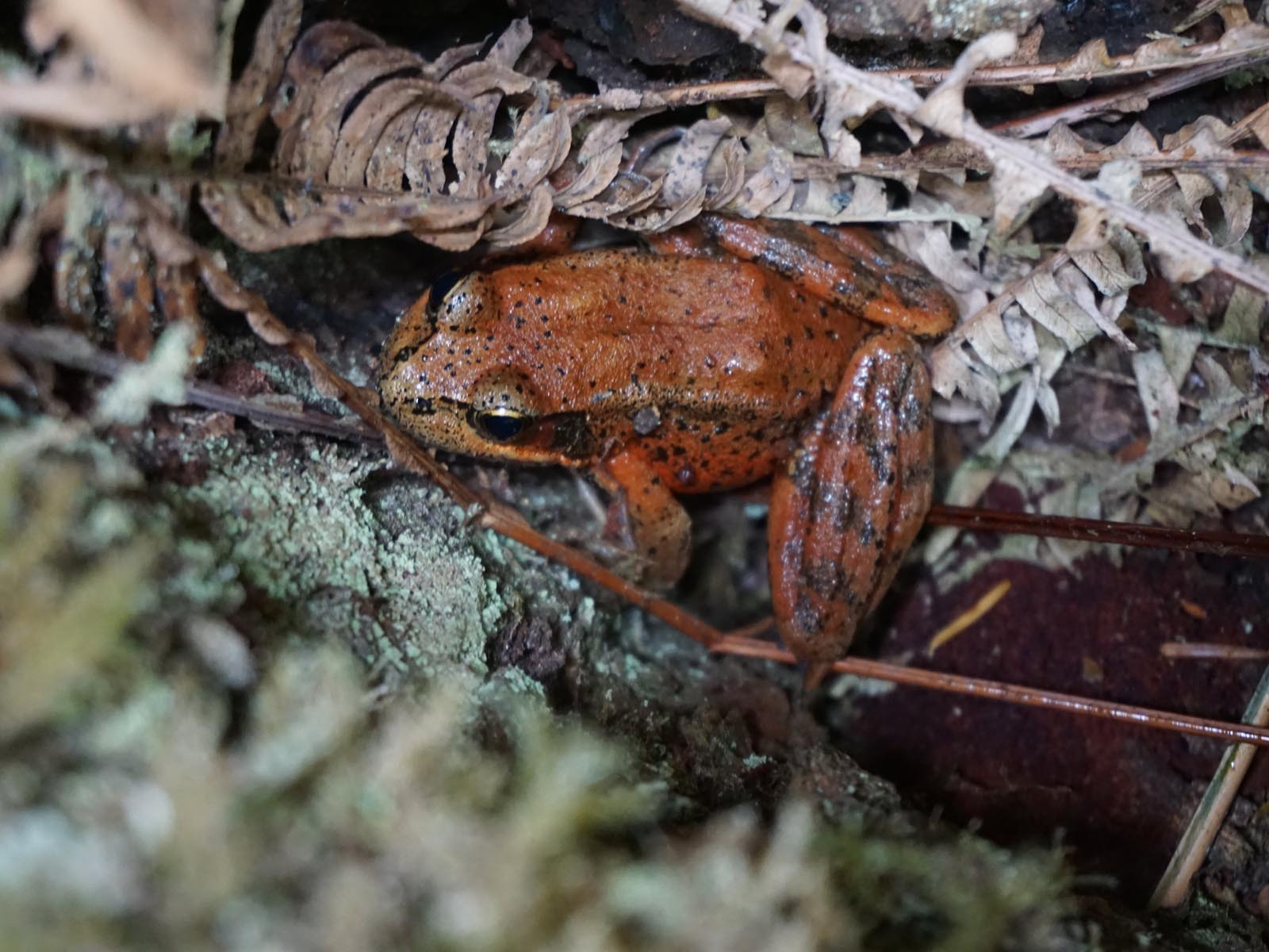 Frog in the Forest, Olympic National Park, Washington | Photo Credit: NPS