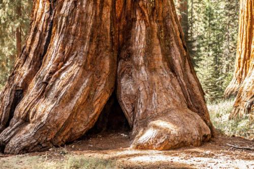 Yosemite in the fall-1-2